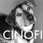 ilcinofilo