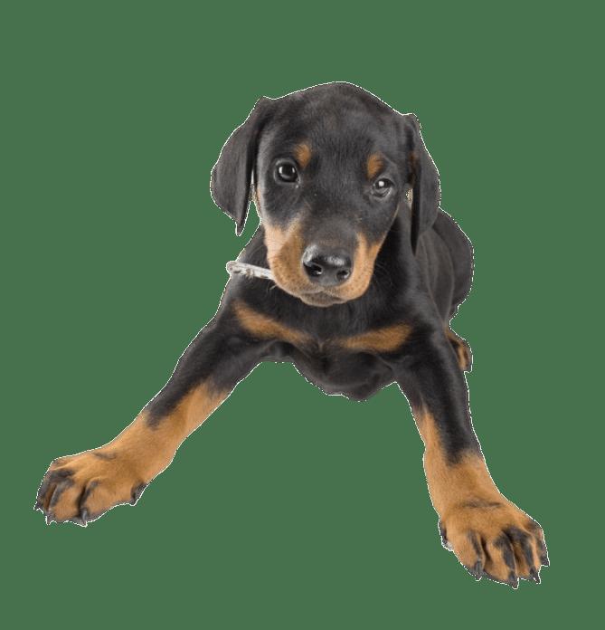 Scelta del cucciolo