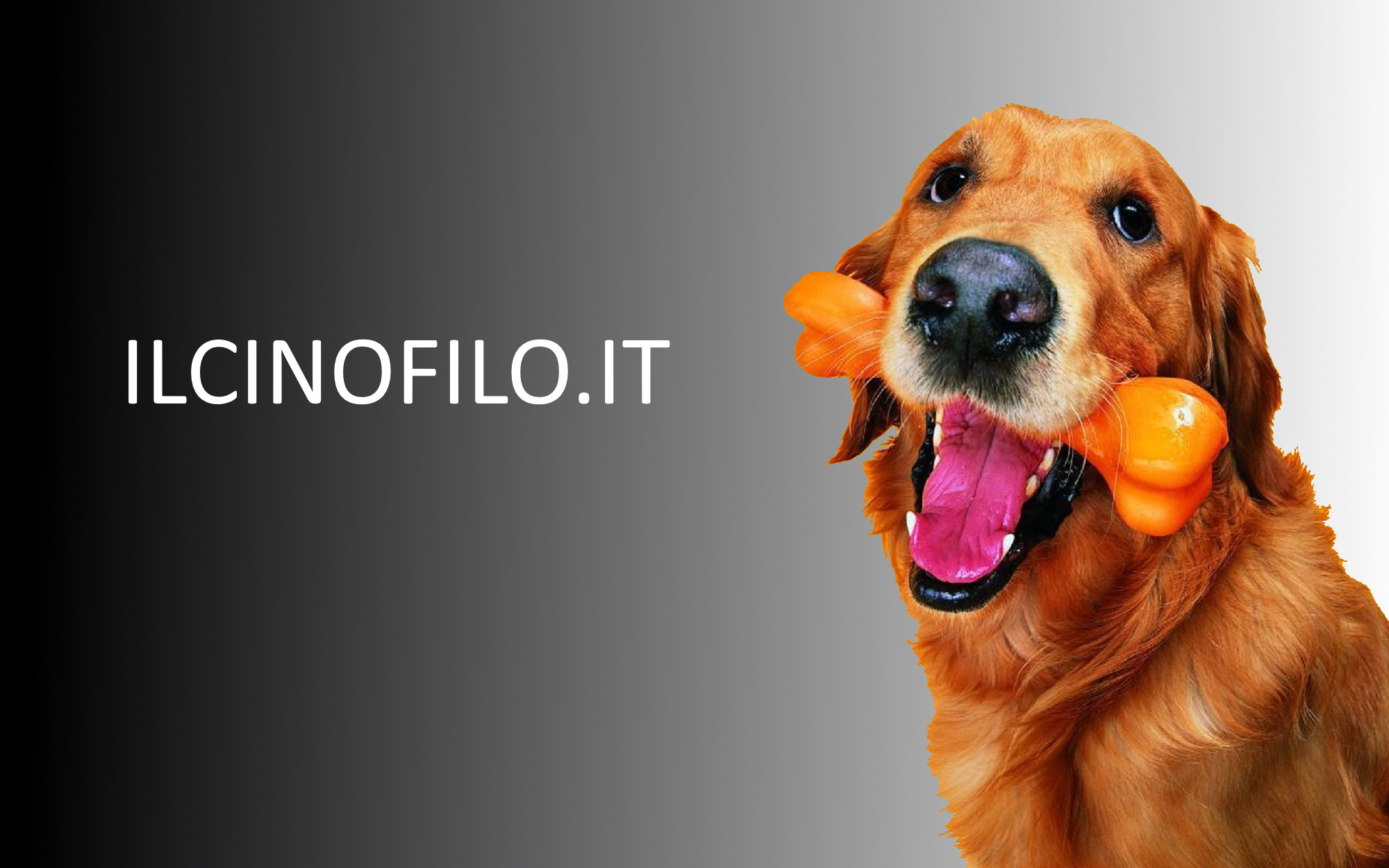 ILCINOFILO.IT