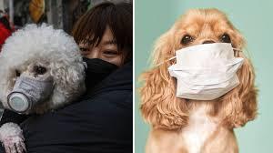 Il cane ed il Covid-19 -STRESS da stasi.