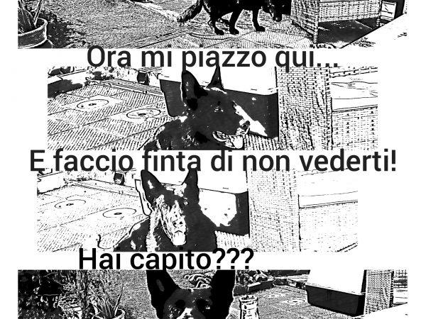 Il cane cattivo